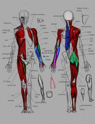 Anatomy demo by FUNKYMONKEY1945