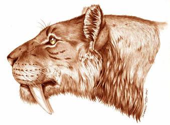 smilodon by Gonzalezaurus