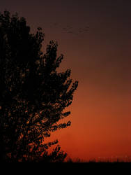 Requiem for a Dream by minica