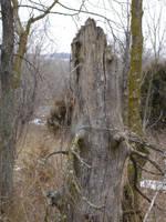 woods006 by pexa-stock