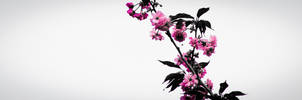 2012-05-02_002 by rootscratch