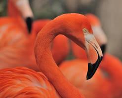 flamingo III by filthyhandss