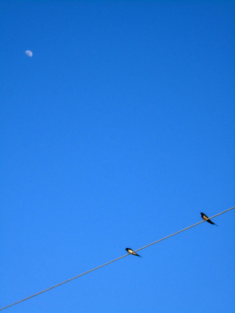 Two swallows observing the moon... by Johny-Leek-Sama
