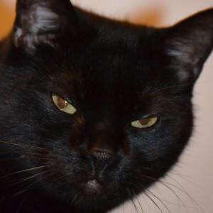 Majestiqo's Profile Picture