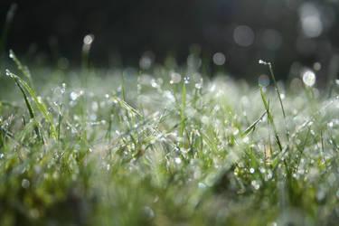 Dew by behindyoureyes