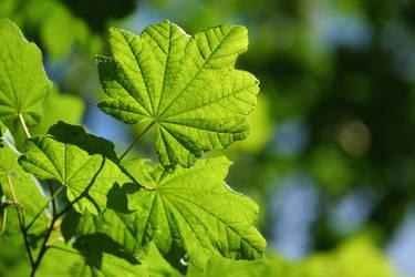 Leaves by behindyoureyes