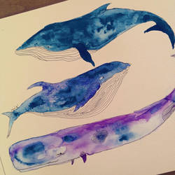 whales in aquarelle by BDmaya