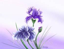 Irises by TwoHorizonsArt