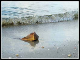 Lonely Shell - Preview II by flordelys-stock