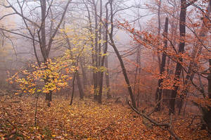 Veil of Autumn by alban-expressed