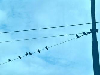 Bird Symmetry by blueturtle
