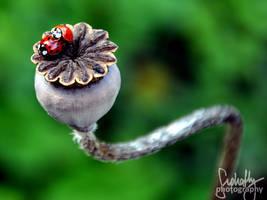 H u m p i n g by suphafly