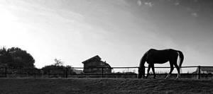 A horse by Ratafluke