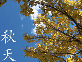 Autumn Leaves.. by tigerlea