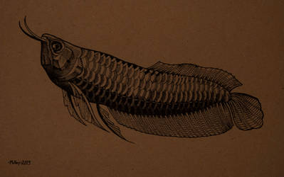 Silver Arowana by William-J-McVey