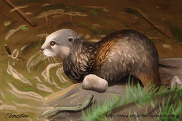 Otter study by Clemastine
