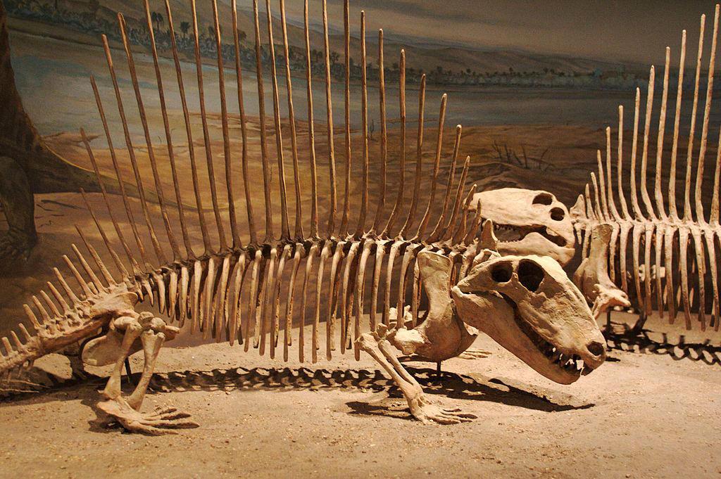 1024px-Dimetrodon pair by zap123build