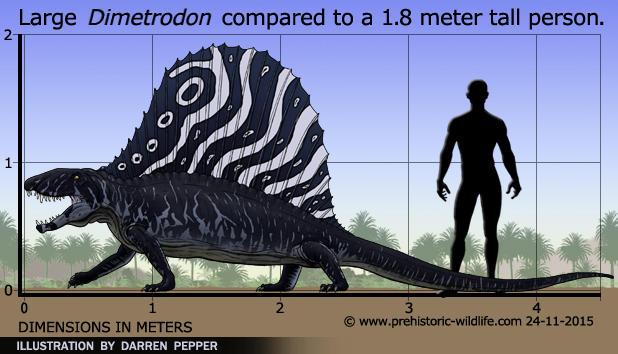 Dimetrodon-size by zap123build