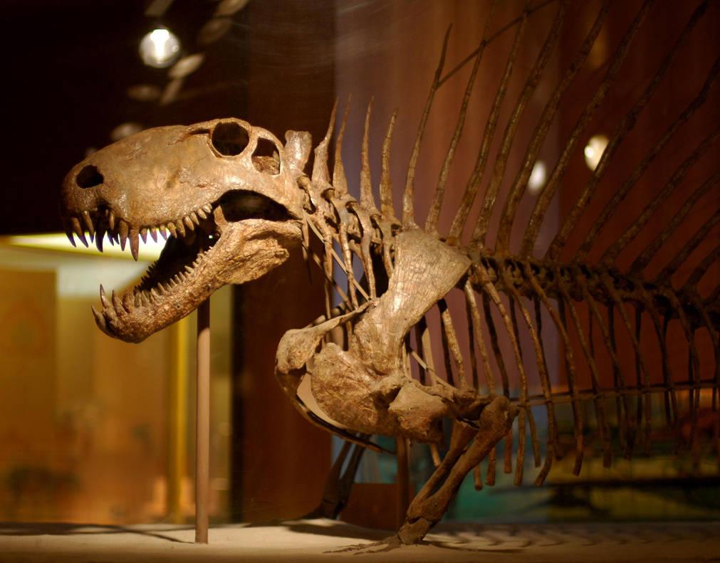 Dimetrodon skeleton by zap123build