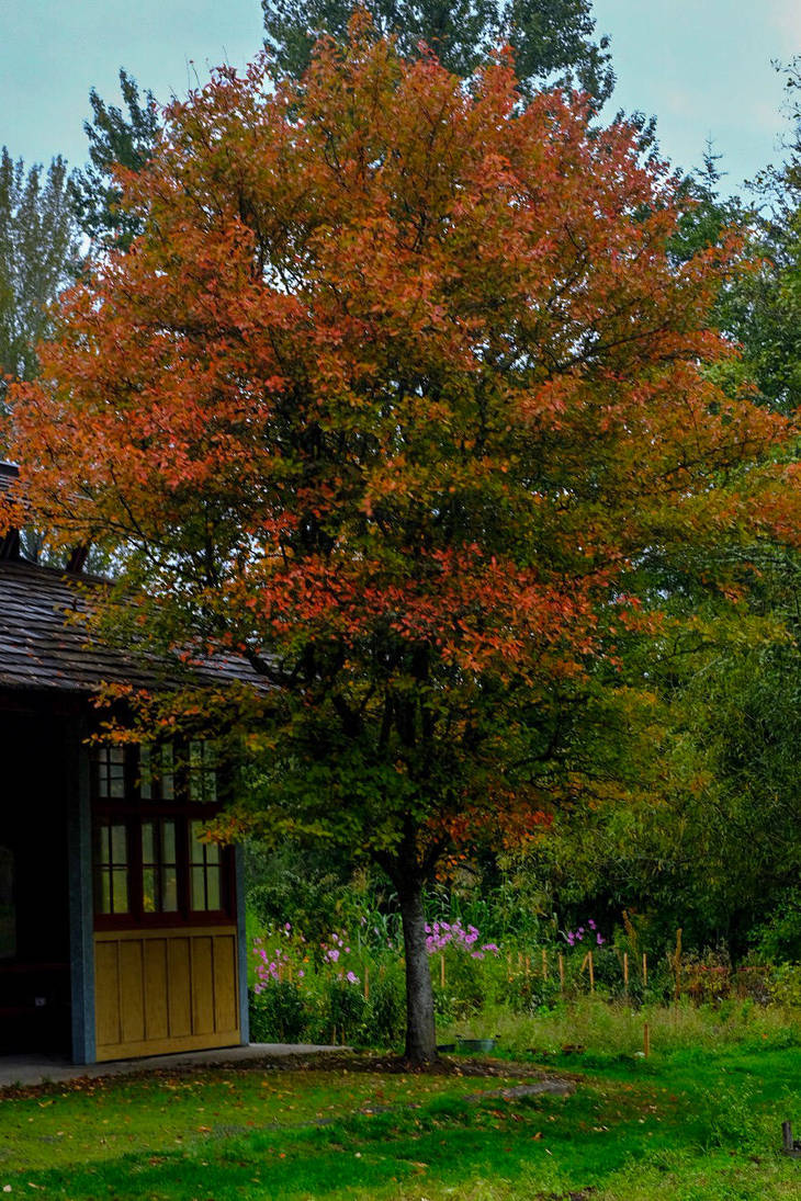 Fall colors by acollins973