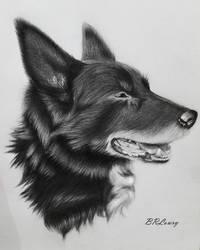 Portrait of a Dog by MidnightRoseGarden
