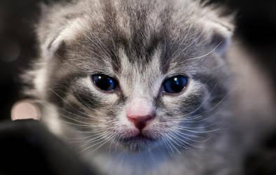 Kitten by klot