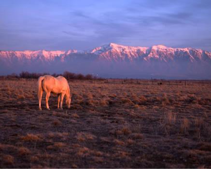 Horse by mymamiya