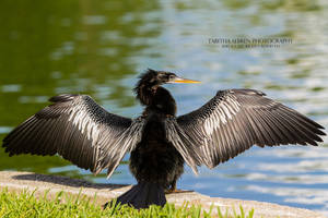 Drying Off by TabithaS-Photography