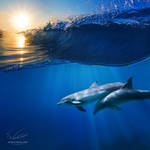 Two beautiful dolphins under wave by Vitaly-Sokol