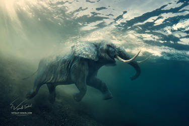 Underwater-elephant by Vitaly-Sokol