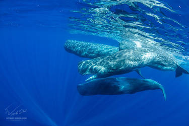 Let's Have Whales of A Time by Vitaly-Sokol