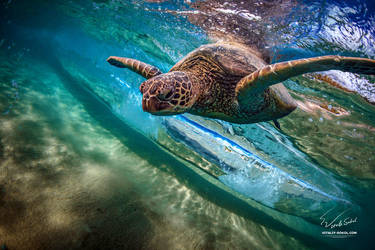 Under Wave by Vitaly-Sokol