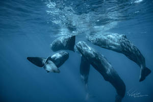 Whales in The Ocean by Vitaly-Sokol