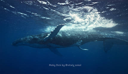 Moby Dick Welcomes you / Humpdick Whale by Vitaly-Sokol