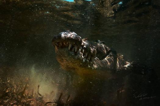 Predator by Vitaly-Sokol