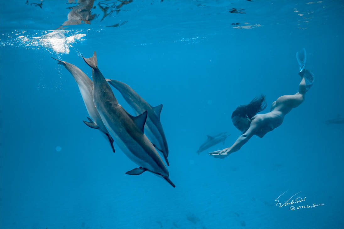 Swimming with dolphins by Vitaly-Sokol