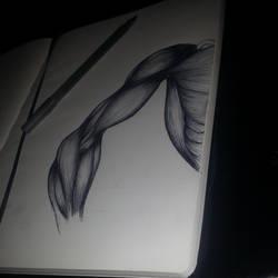 Anatomy ballpoint pen moleskine sketch by Bo19