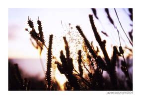 :: sunrise :: by Jazer