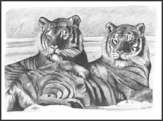 Tigers by d3javu3