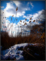 Frozen Marsh by Ryser915