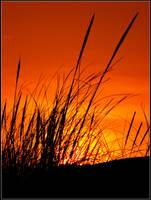 Dune Grass by Ryser915