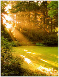 Morning Light on the Bog by Ryser915