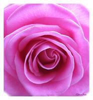 Lighted Rose by Deb-e-ann