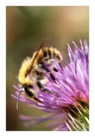 The Pollen collector by Deb-e-ann