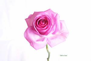 Studio Rose 142 by Deb-e-ann