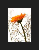Spring Orange by Deb-e-ann