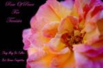 Rose For Tunisia by Deb-e-ann
