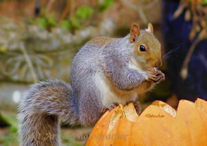 Hmm Nice pumpkin by Deb-e-ann