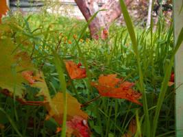Foglie d'autunno by EstelAlasse
