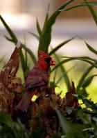 Cardinal by El-Sharra